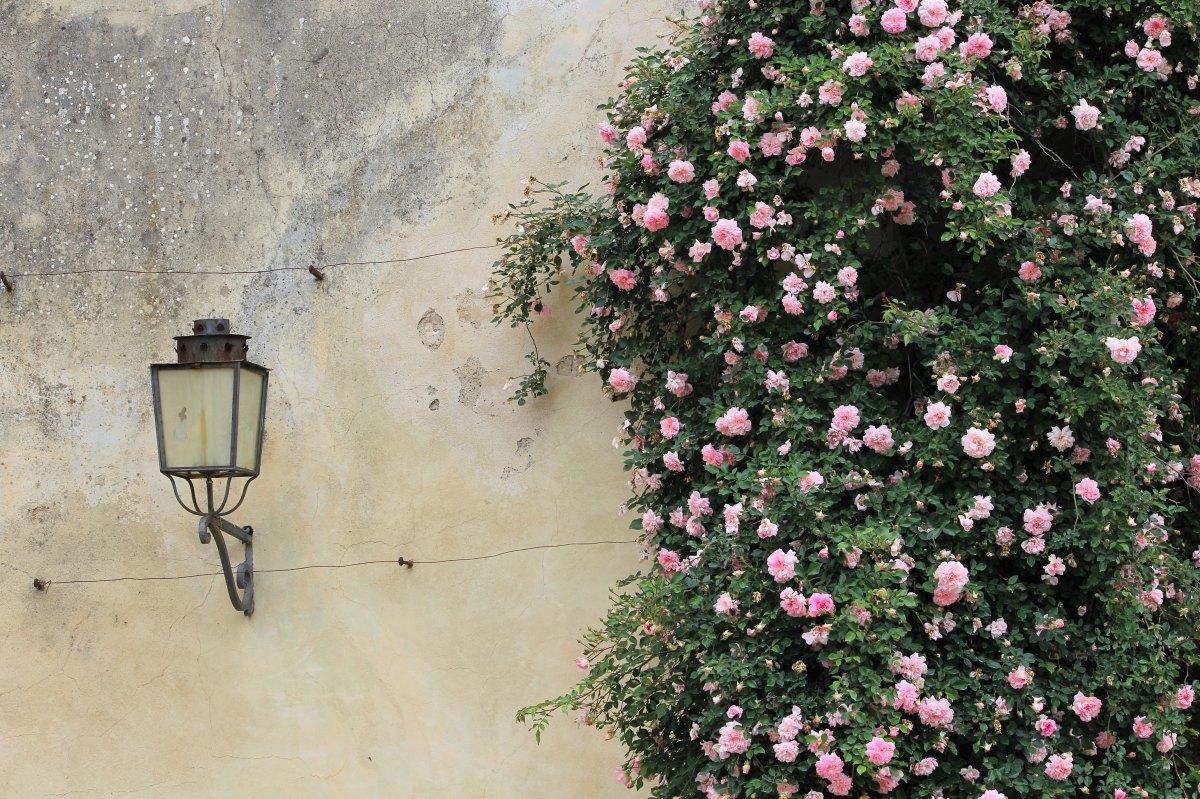 Florence flowers.jpg